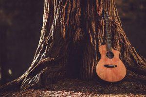 تفاوت چوب های گیتار آکوستیک